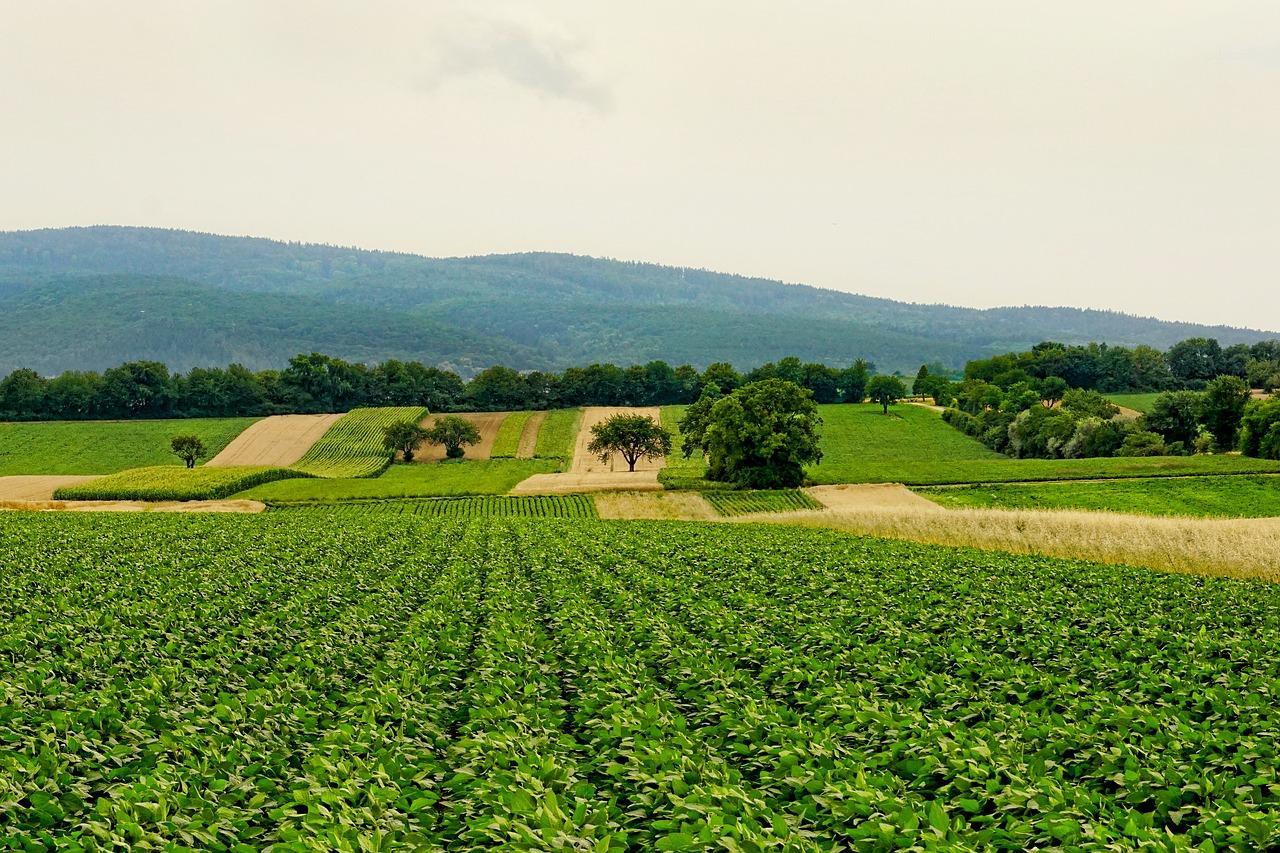 creditele-pentru-agricultura-care-sunt-destinatiile-pentru-care-pot-fi-obtinute